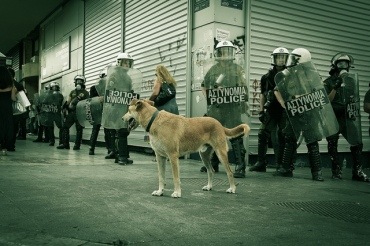 Loukanikos at a demonstartion on Syntagma Square. 5 October 2011 (Photo: Odysseas Gp/Flickr)